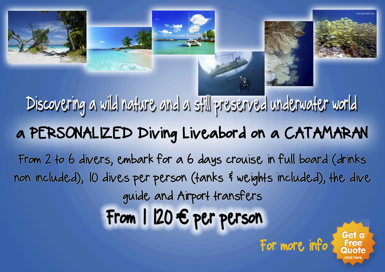 forever dive diving center nosy be madagascar