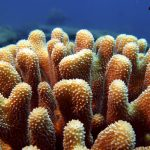corail nosy be